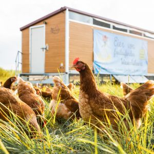 ChickenTrailer-1