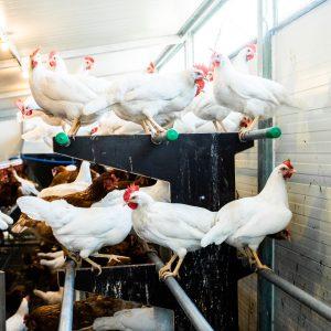ChickenTrailer-7