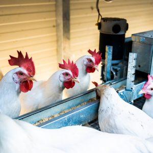 ChickenTrailer-9